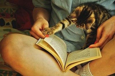 book-cat-cats-girl-Favim.com-612406