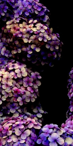 Shades of Lavender 13