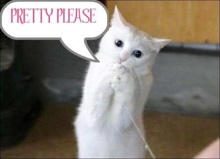 pretty_please_cat-1