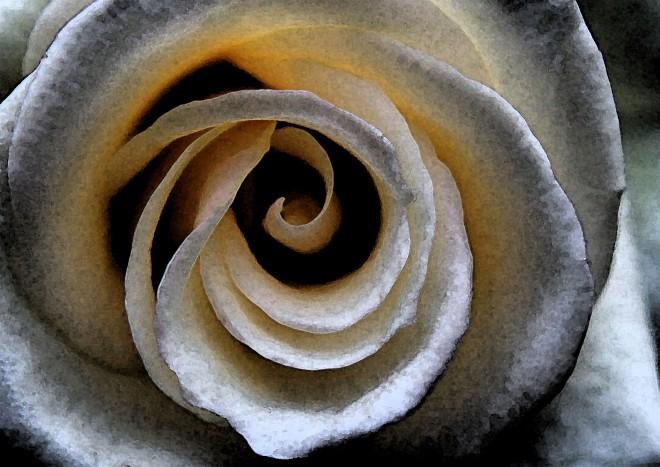 11.13.14.rose